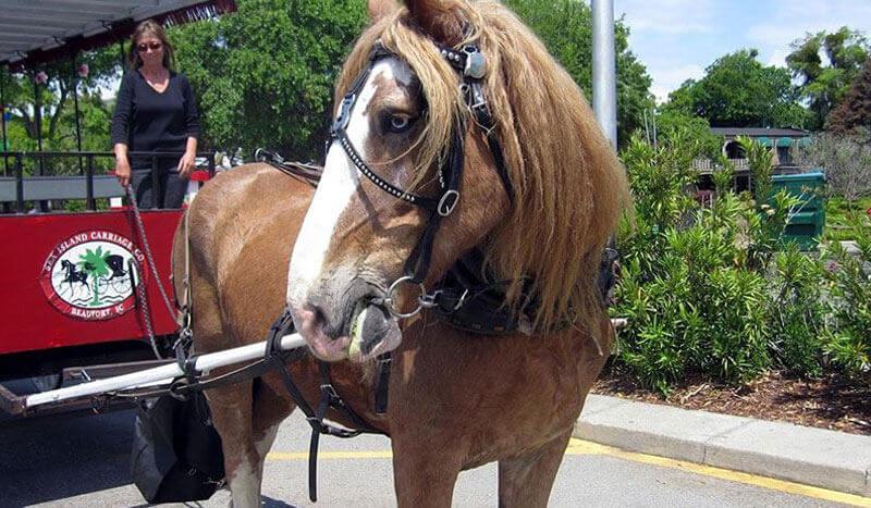 Sea Island Carriage Company Beaufort South Carolina