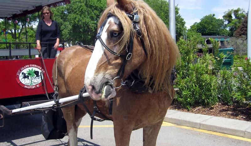 Sea Island Carriage Company Beaufort Tours South Carolina
