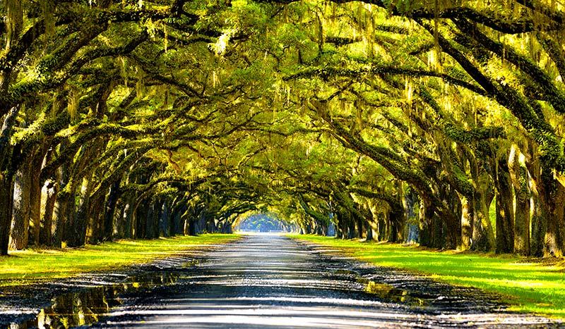 Spanish Moss Trail The Outdoors South Carolina